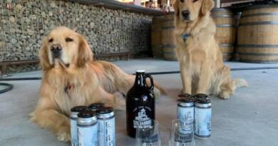 собаки доставляют пиво, пиво на самоизоляции